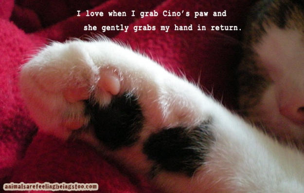 paw-with-saying-AAFBT