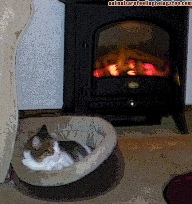 cino-by-fireplace