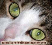 cino-eyes