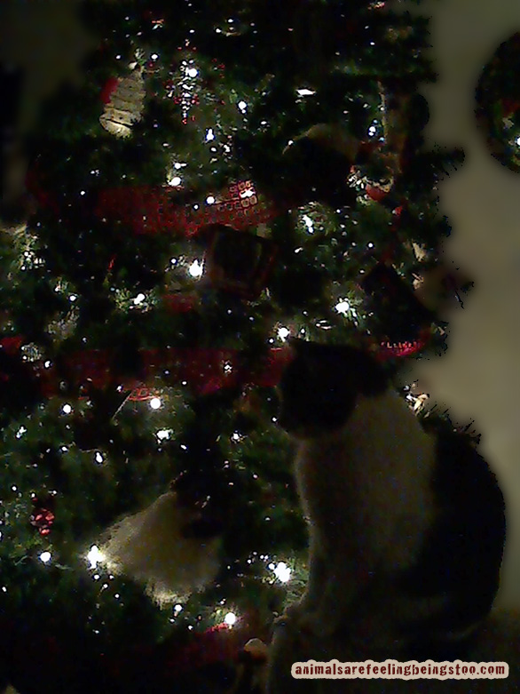 cino-tree