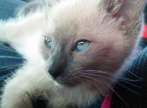 artemis-blue-eyes-renee-twoblogs