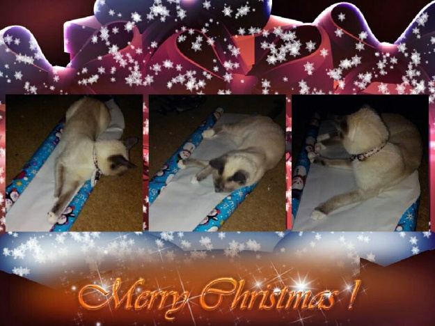 artemis-wrapping-renee-twoblogs