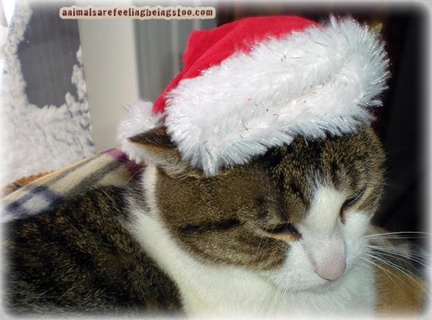 cino-in-santa-hat2