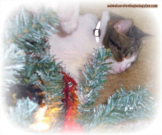 cino-under-tree