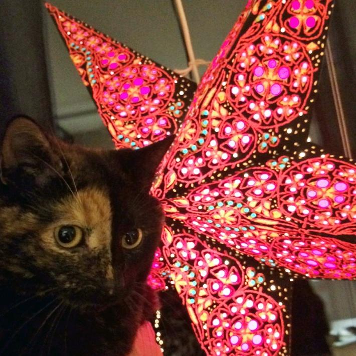 lola-with-christmas-star-2bloggingcats