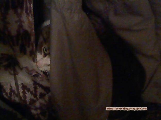Cino-hiding-in-coat
