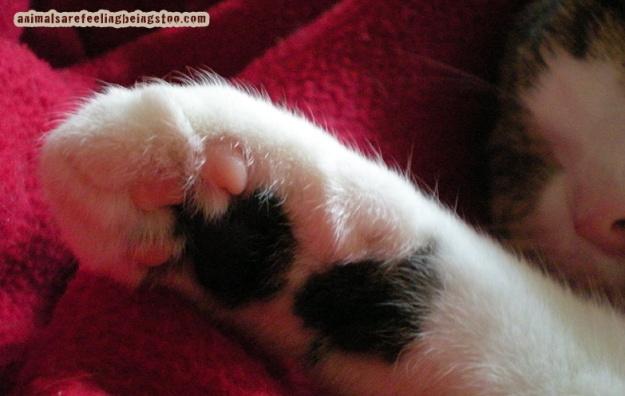 cino-paws