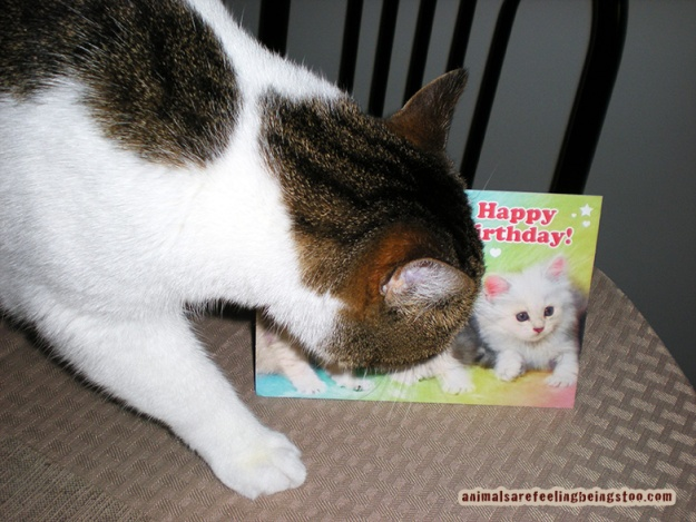 Cino-checking-out-bdaycard