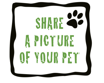 share-a-petpic-words