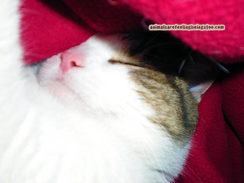 sweet-sleeping-Cino