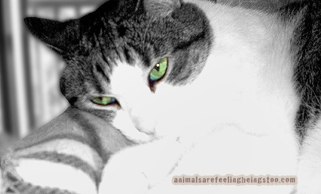 cino-green-eyes-blackwhite
