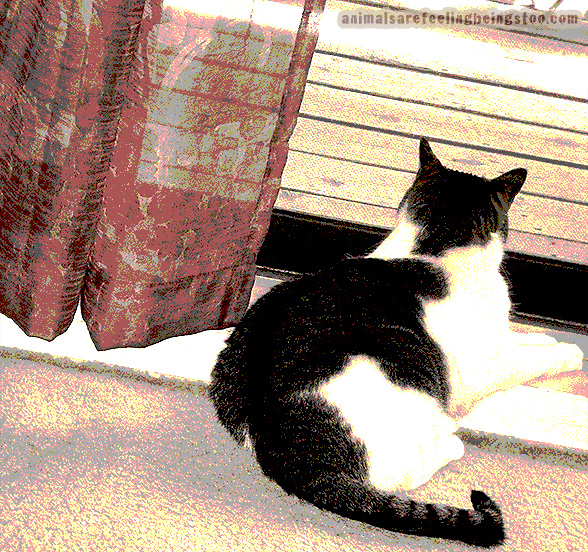 cino-looking-outside-home-from-vet-sepiafilter-and-posterized