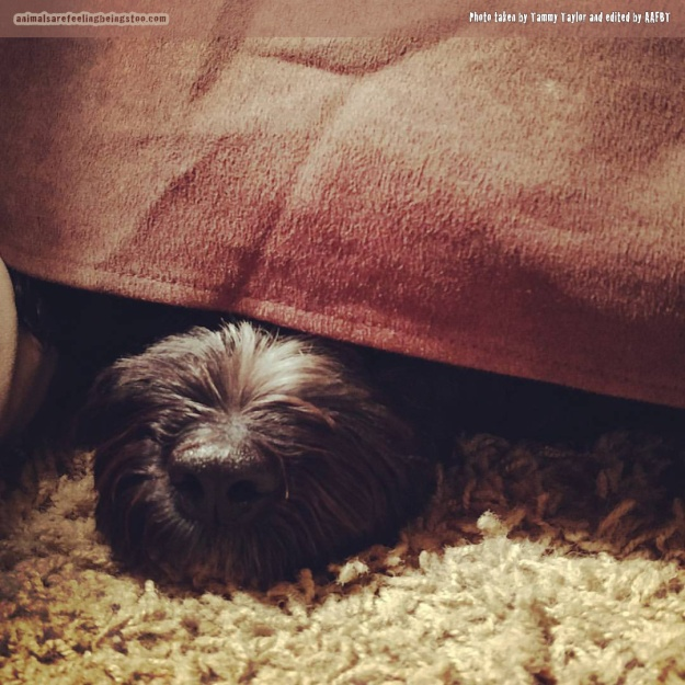 Bogey-Tammy-under-covers
