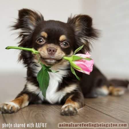 Sammy-Kathy-aafbt