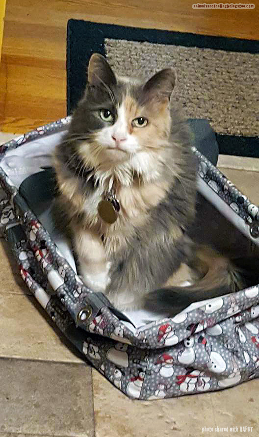 cat in bag-aafbt2