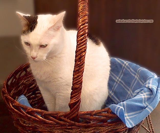 cat-in-basket-at-skadron-aafbt