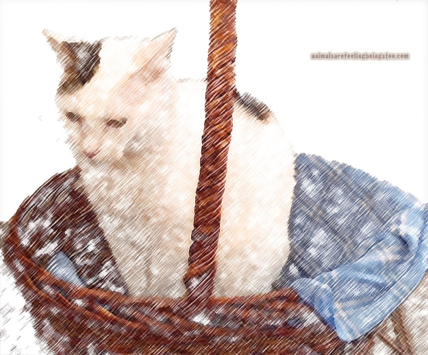 cat-in-basket-at-skadron-pencil