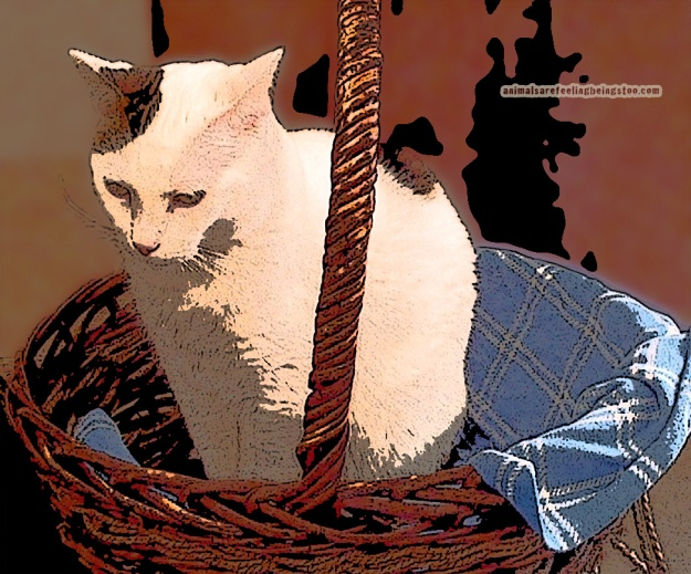 cat-in-basket-at-skadron-posterized