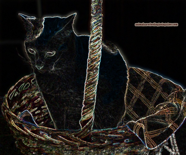 cat-in-basket-at-skadron-stylize