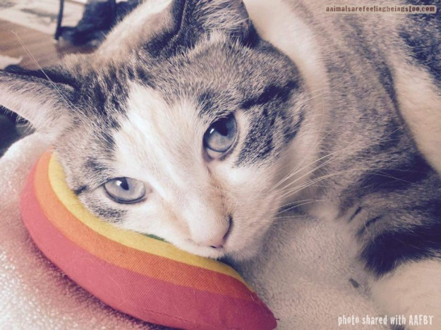 cat laying on pillow toy-aafbt