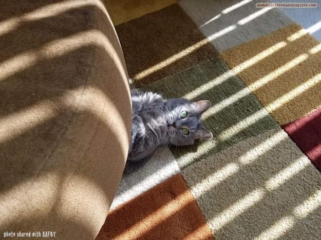 cat under couch-aafbt
