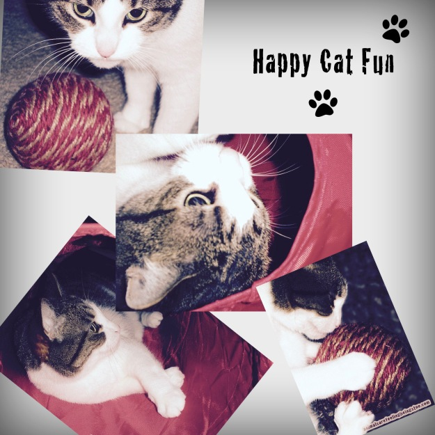 Cino-september-happy-cat-fun