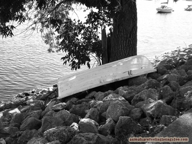 boat-on-shore-edited-blackwhite-smaller-aafbt