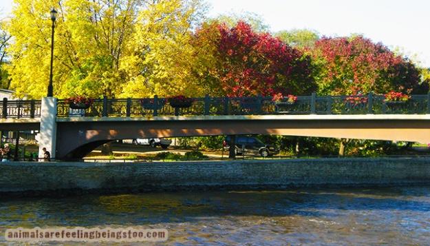 bridge-aafbt