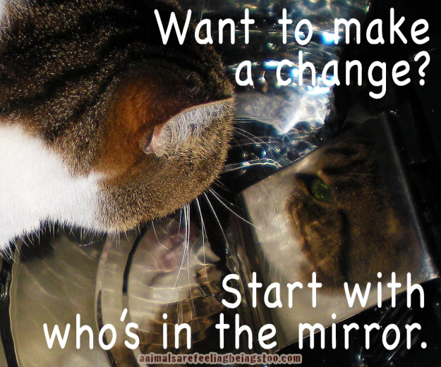cino-in-mirror-make-a-change-aafbt