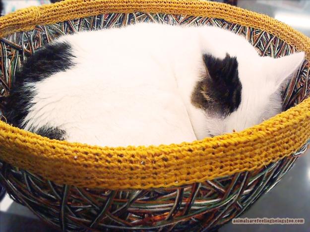 curled-up-aafbt