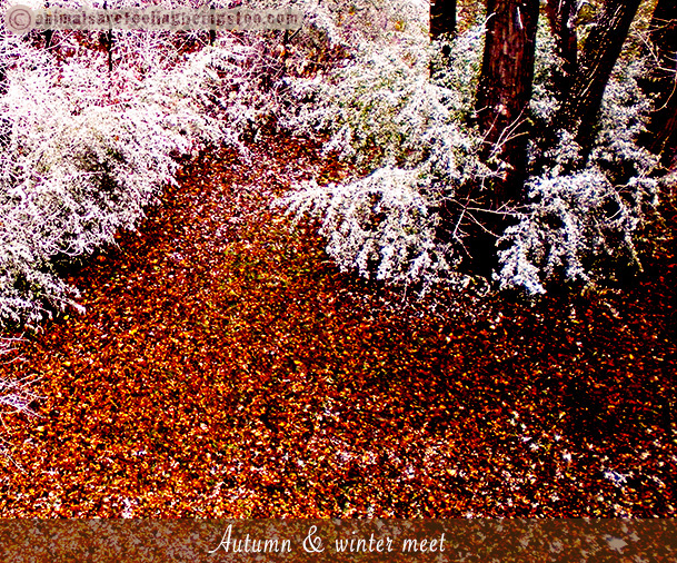 leaves-on-ground-snow-in-bushes-aafbt
