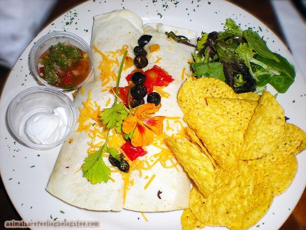 lunch plate-aafbt