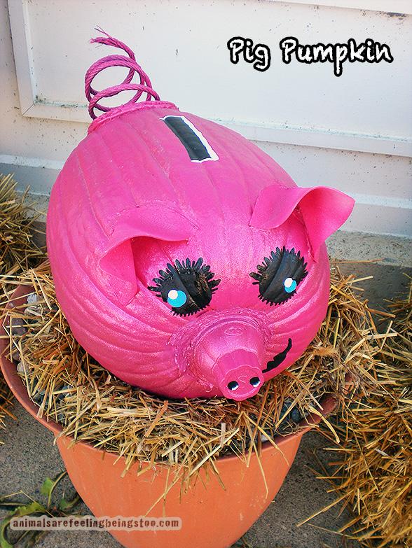 pig pumpkin-aafbt