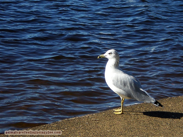 seagull-edited-smaller-aafbt