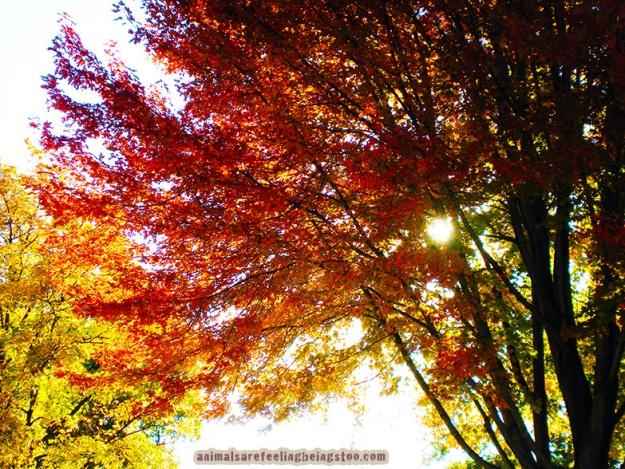 sun-through-trees-aafbt