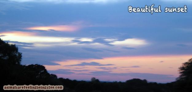 sunset sky-aafbt