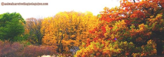 trees-aafbt