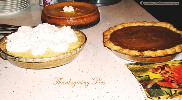 thanksgiving-pies-aafbt