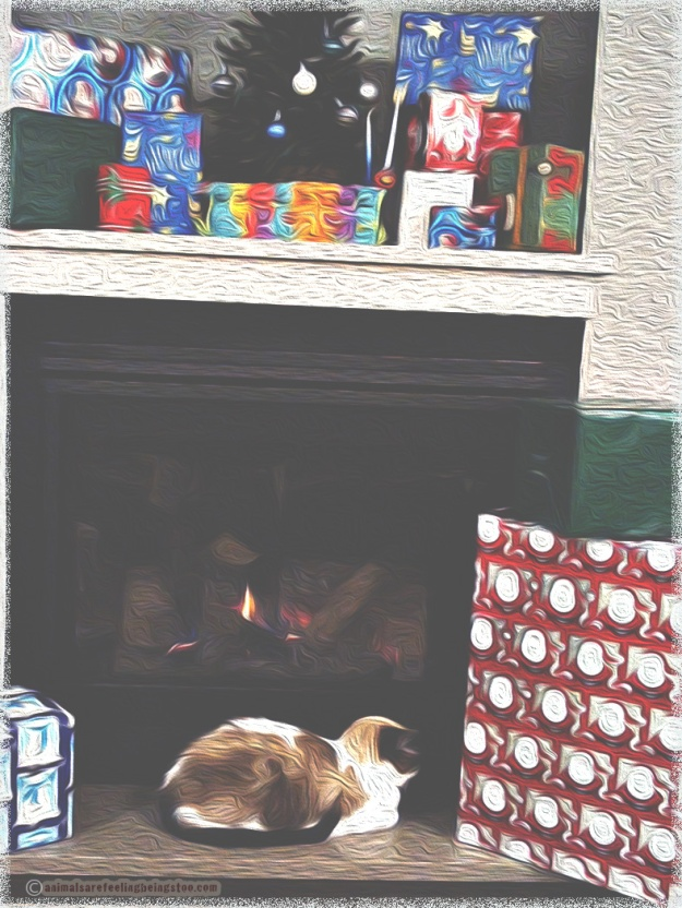 cat-fireplace-skadron-christmas-2017-aafbt