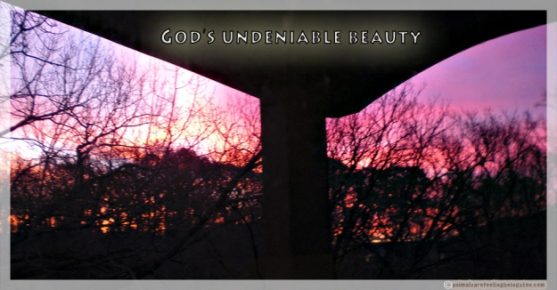god's undeniable beauty-aafbt