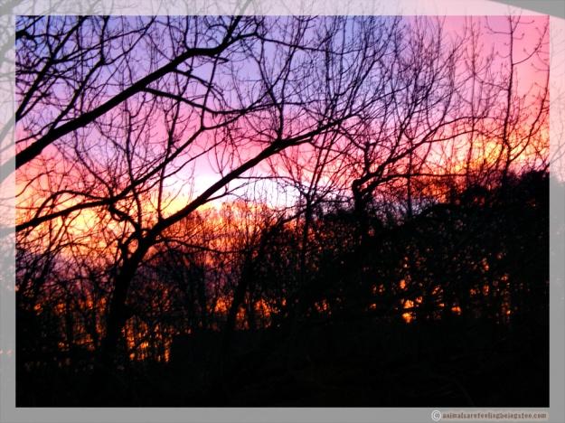 gorgeous-sunrise-aafbt