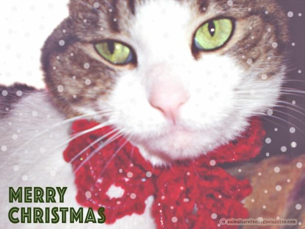 merry-christmas-cino-2017-aafbt3