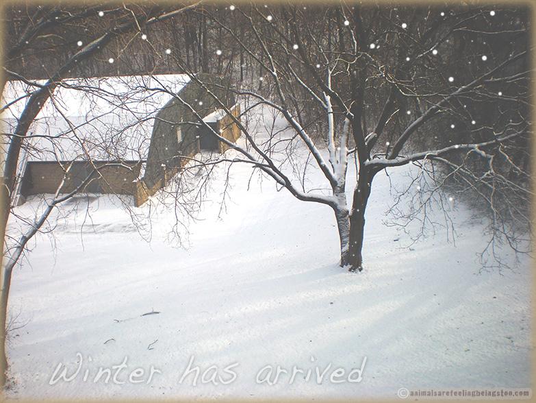 snow2017-aafbt