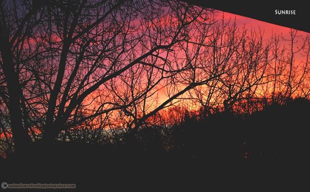 sunrise2-aafbt