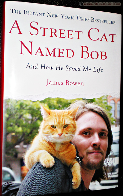 street-cat-named-bob-book-aafbt
