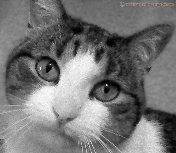 close-up-black-white2