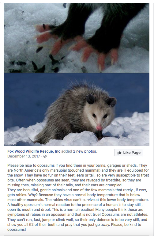 FB post about opposums