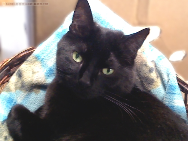 black-cat-vet-aafbt