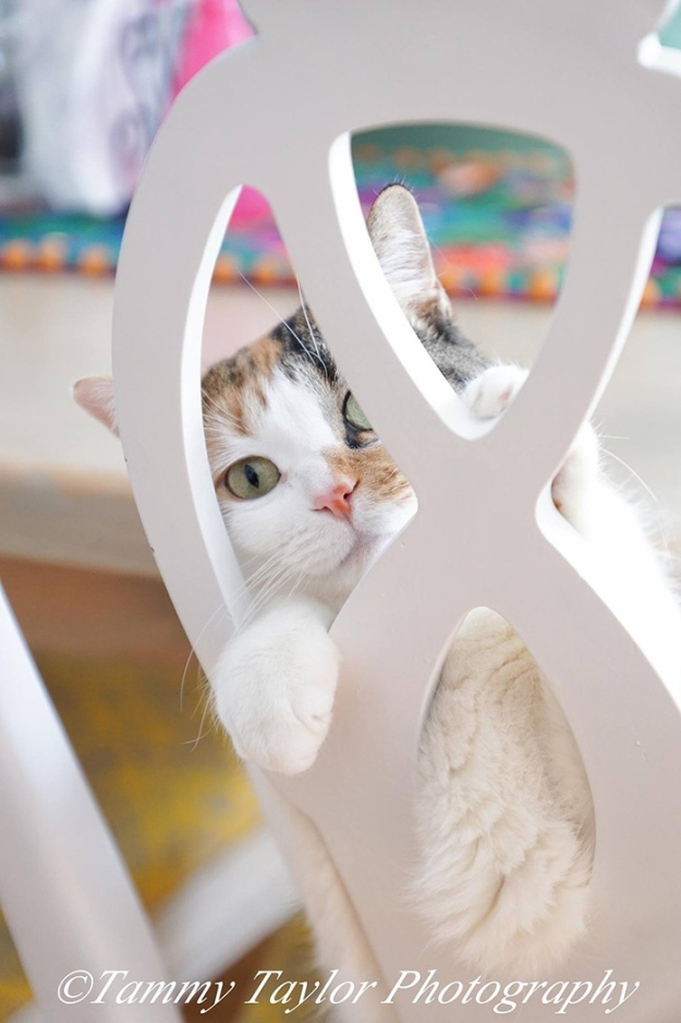 cat-by-chair-tammy-photography-size-smaller