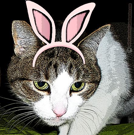 cino-bunny-ears-aafbt